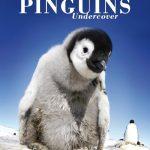 Pinguïns undercover: iedereen kijkt