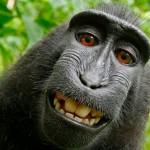 Wat vindt die aap er selfie van?