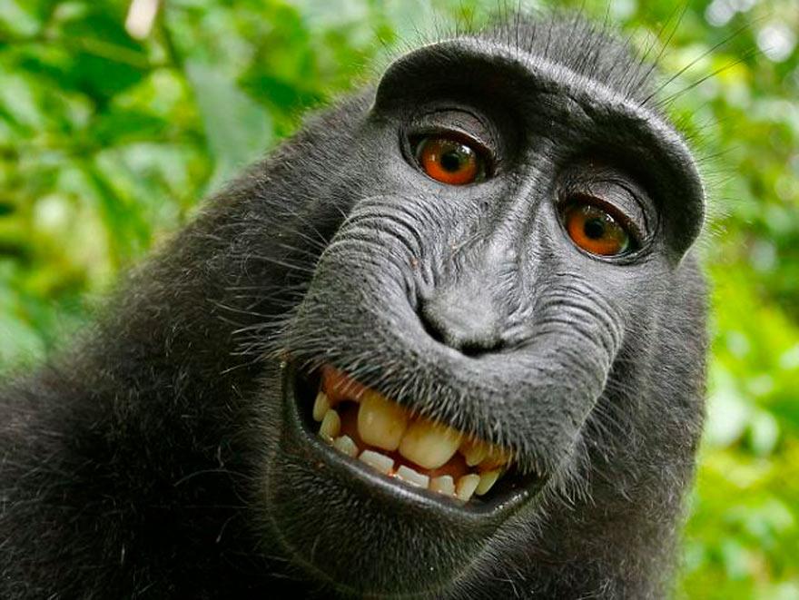 Welke aap ben jij?