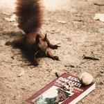 Rode eekhoorn gaat voor literatuur
