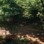 De zomer dat het bos verbouwd werd