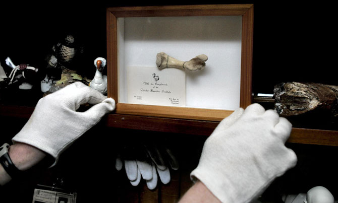 Büchs dodo-botje