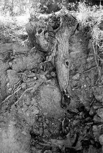 Het eiland waar mijn wortels liggen © Liliane Waanders