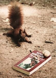 Rode eekhoorn gevallen voor Dorrestein? © Liliane Waanders